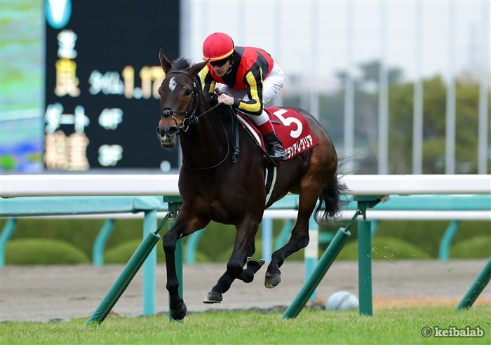 阪神カップのレース写真
