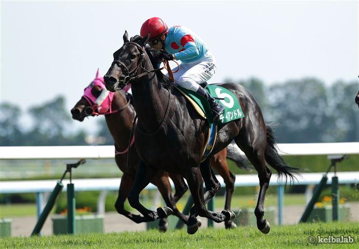 葵ステークスのレース写真