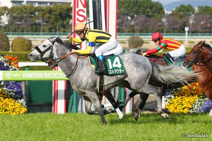 阪急杯のレース写真