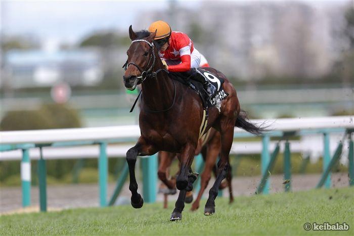 京都新聞杯のレース写真