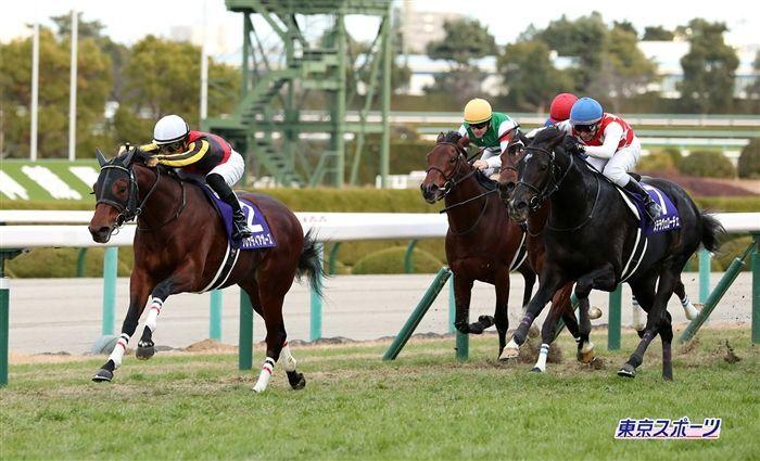 NHKマイルのレース写真