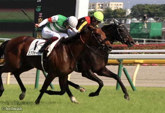 神戸新聞杯のレース写真