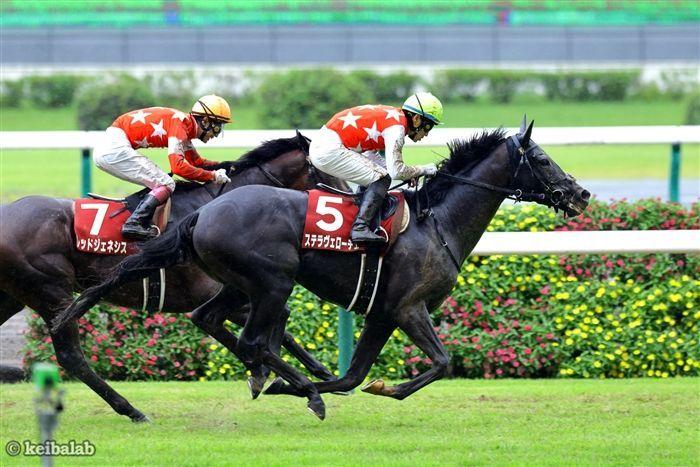 菊花賞のレース写真
