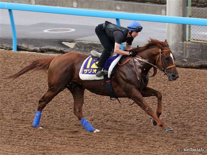 逆転を狙う素質馬サリオス