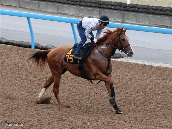 福島で新馬勝ちしたコンドゥクシオン