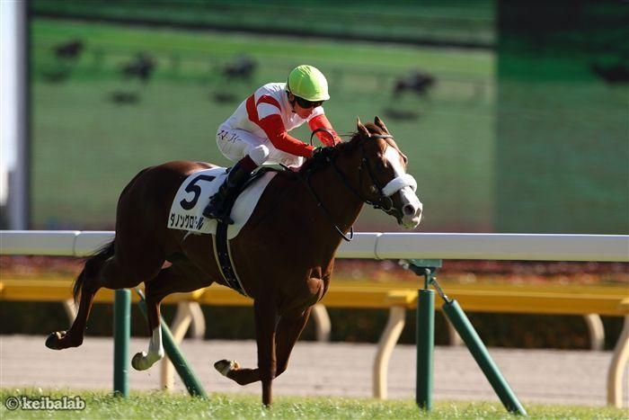 3連勝での菊花賞獲りを目指すダノングロワール