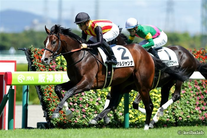 エプソムカップに出走する池江厩舎の管理馬アルジャンナ<br>写真提供:競馬ラボ