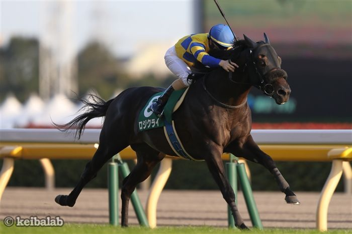 新潟直線芝1000mで有利な8枠に入った関西馬ロジクライ<br>写真提供:競馬ラボ