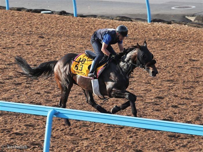 東京芝1800mを得意とする石橋騎手騎乗のダイワキャグニー