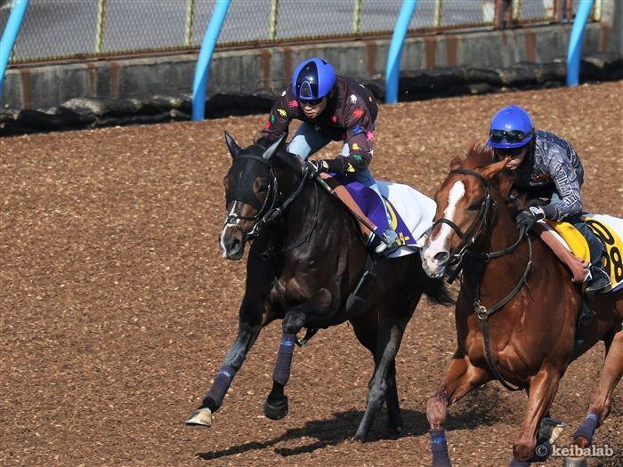 好枠を引いた弥生賞勝ち馬タイトルホルダー